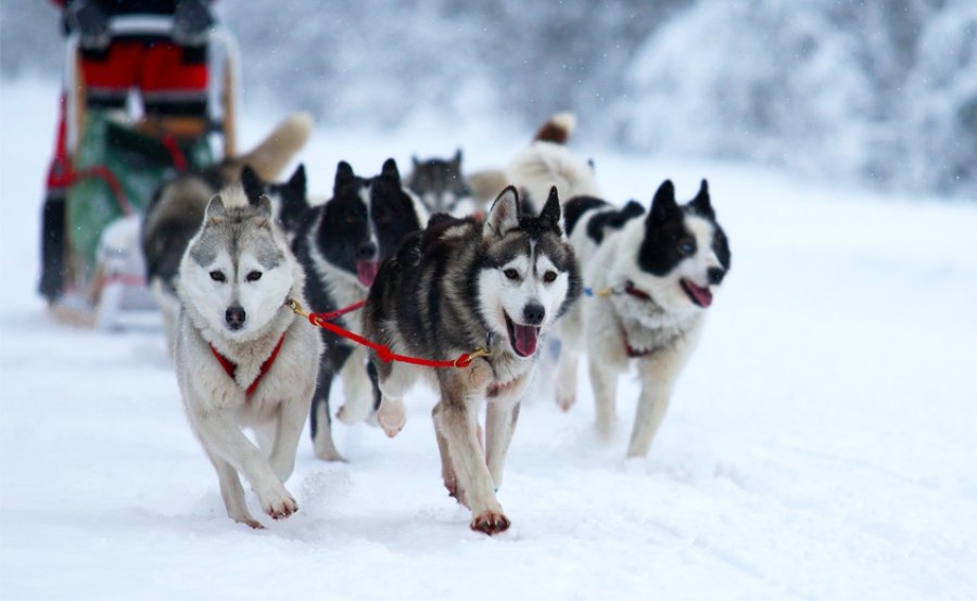 Dog Sledging in Karelia ©lori photostock