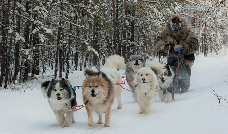 Dog Sledding in Yakutia © Bolot Bochkaryov